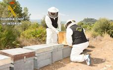 Un detenido y un investigado por envenenar a más de 16 millones de abejas en Montesa