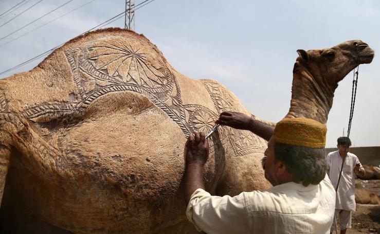 Fotos de las preparaciones para el Eid al-Adha, la celebración musulmana de sacrificio