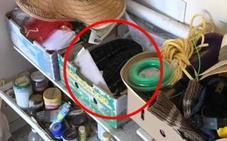 Solución | Una pitón se esconde en el garaje de una casa en Australia