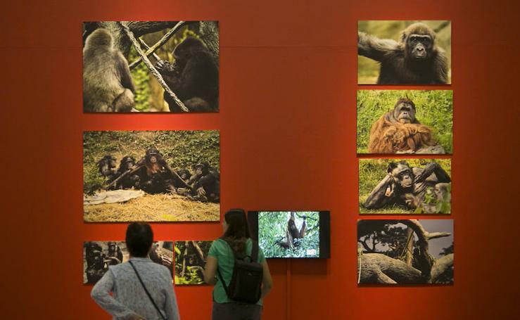 Fotos de la exposición Valencia Capital Animal