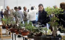 Una máquina valenciana para comunicarse con las plantas