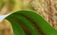 Tatuajes para plantas para ahorrar agua a los agricultores