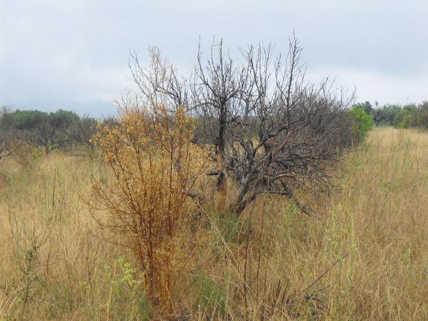 El abandono de cultivos sigue imparable   Las Provincias
