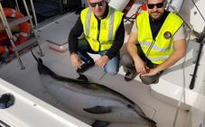 Aparece muerto un delfín listado frente a la playa de Els Molins de Dénia