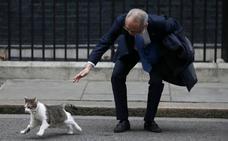 El gato Larry 'reina' en Downing Street