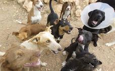 PACMA asegura que el Consell permitirá «el exterminio masivo de perros y gatos» con su nueva ley