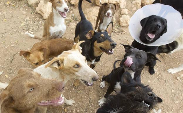 Centro de acogida de animales valencia