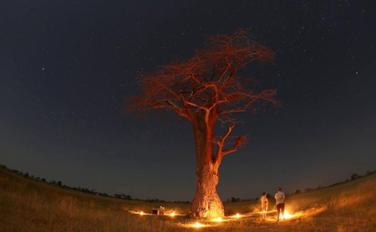 Un viaje apasionante a África: El delta del Okavango