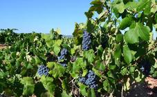 Los agricultores de la comarca de Requena y Utiel tendrán doble dotación de agua por la sequía