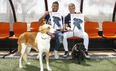 40 perretes buscan familia en un desfile solidario este domingo en Valencia