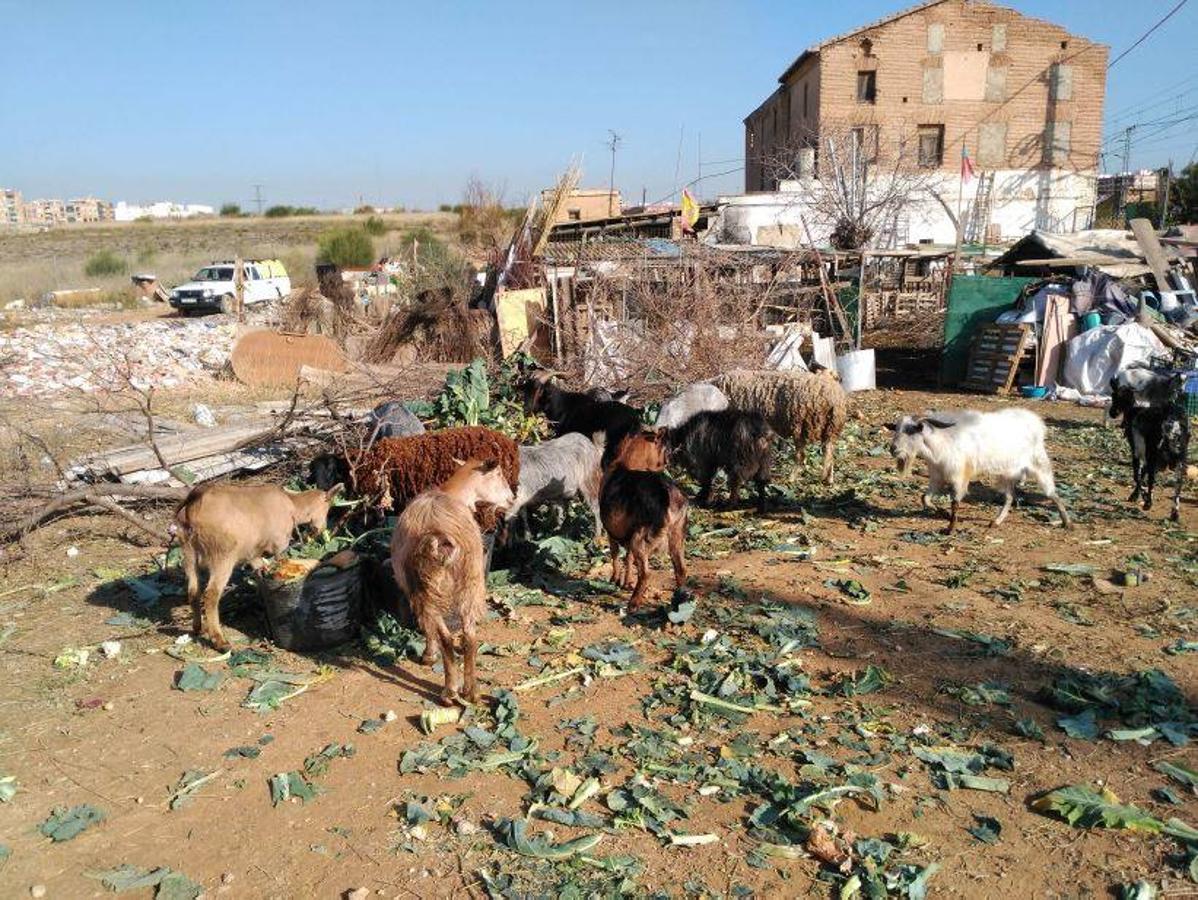Animales en mal estado en una alquería en Valencia