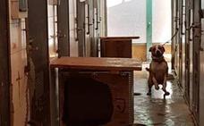 Hacinamiento en el refugio de animales de Valencia