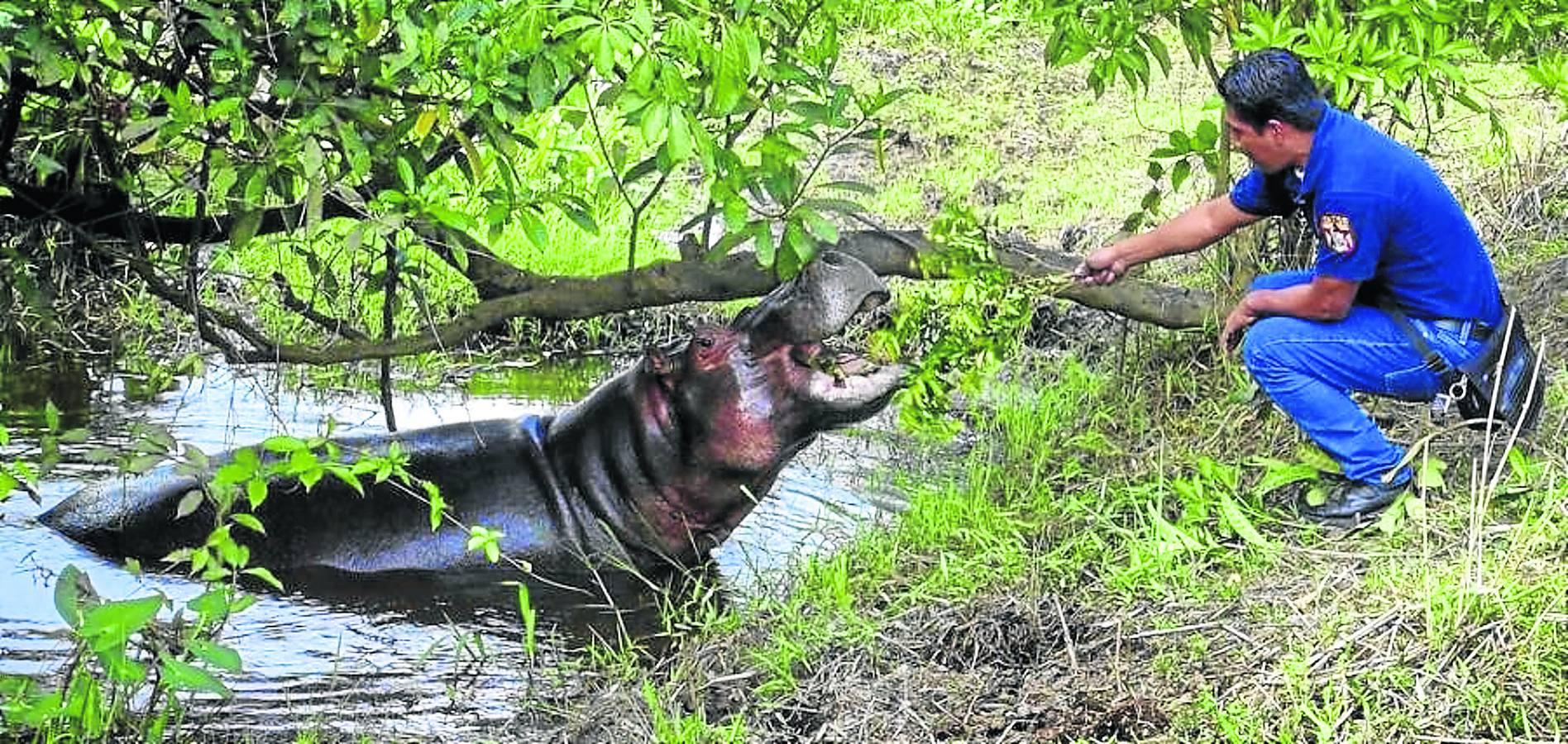 Los hipopótamos del narco
