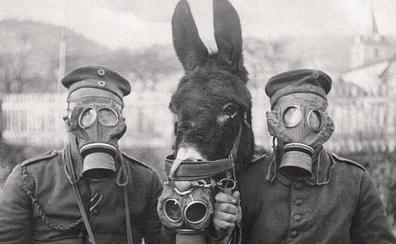 París se resiste a honrar a los animales de la Gran Guerra