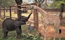 La amistad entre la elefanta Molly y la jirafa Sebastien, un cuento cruel