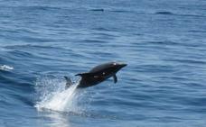Avistamiento de delfines en Dénia en aguas de la reserva marina