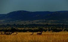 Parque Natural de Cabañeros, el pulmón de La Mancha