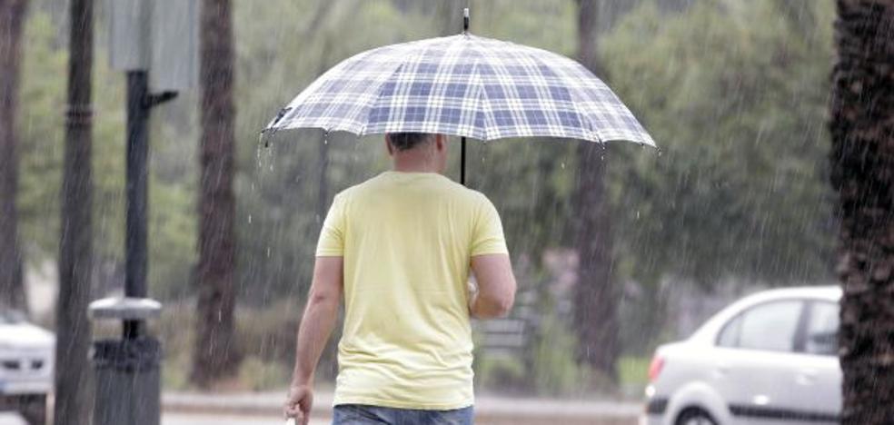 Las lluvias favorecen la propagación del mosquito tigre y de las cucarachas