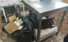 El refugio de animales de Valencia toca fondo