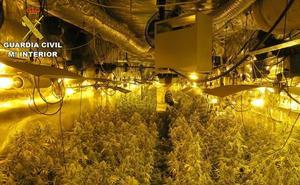 Desmantelada una 'startup' de marihuana en la Comunitat que seguía 'on line' los cultivos