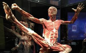 Roba dos dedos pulgares de un muerto en una exposición de cadáveres