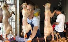 China mata miles de perros para comérselos