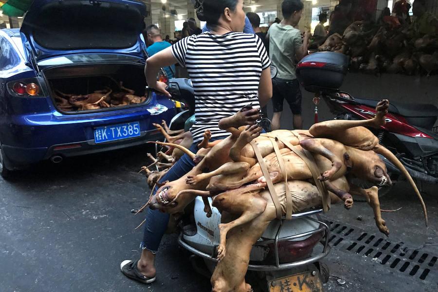 La gran matanza china de perros para comérselos del festival de Yulin