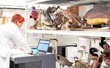 El Museo de Historia Natural de la Universitat renace de sus cenizas