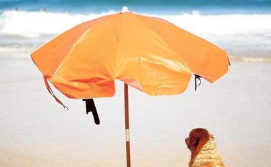 Consejos para disfrutar de una jornada de playa con tu perro