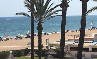 Las playas de Dénia, reabiertas pero con bandera amarilla tras hallar el sábado cuatro carabelas portuguesas
