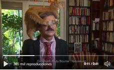 Un gato interrumpe una entrevista y su dueño ni se inmuta