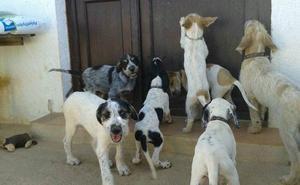 Las razas de perros más vulnerables a los golpes de calor y cómo actuar si ocurre