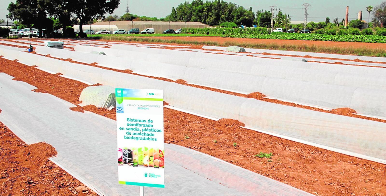 Bioestimulantes para una agricultura más competitiva y saludable
