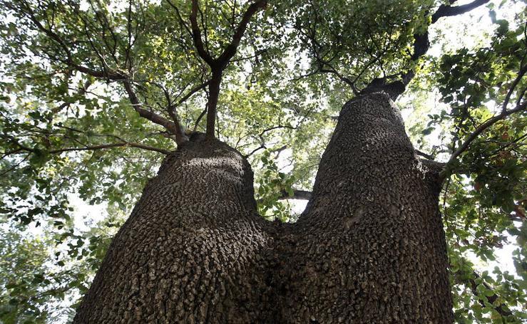 Los árboles que mejor sombra dan de Valencia