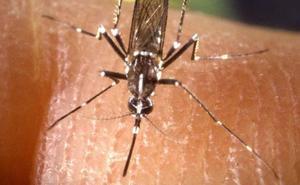 Por qué el mosquito tigre no pica igual a todas las personas