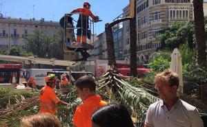 Cae una palmera sobre una terraza en la plaza de la Reina