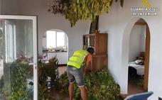 Detienen en Pego a dos hombres por cultivar más de 400 plantas de marihuana