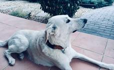 Nika, la perra adoptada de Santiago Posteguillo