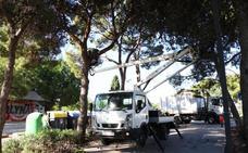 Torrent poda 226 pinos para salvaguardar la seguridad de los peatones
