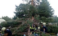 Seis valencianos, heridos al caer un árbol en Navarra