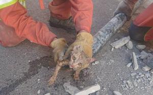 Rescatan a un gato atrapado en una tubería de Cheste