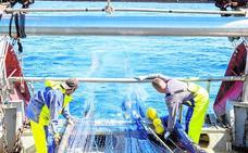 El proyecto RepescaPlas retira 800 kilos de basuras marinas de la costa