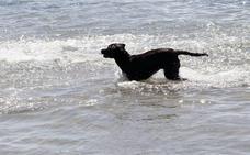Los peligros del agua del mar para los perros