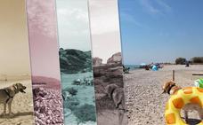 Las playas caninas de la Comunitat