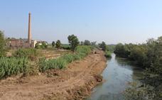 La CHJ retira cañas en el río en Alzira para hacer accesible el camino de Ràfol