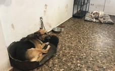 El refugio de animales de Benimàmet