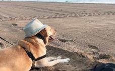 Los 10 mejores destinos para viajar con mascotas