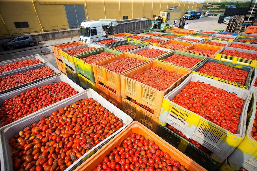 Todo listo para la Tomatina 2018