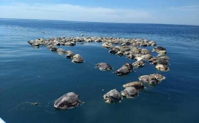 Hallan muertas a cerca de 300 tortugas marinas en peligro de extinción en México
