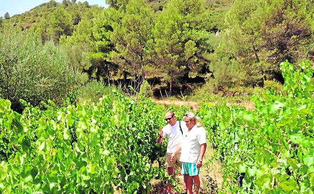 Agrícola Sant Ambròs, el mejor baluarte de los vecinos de Aín